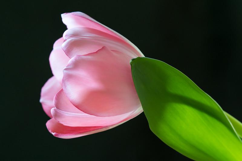Class1D_3rd_paula neumann_soft petals