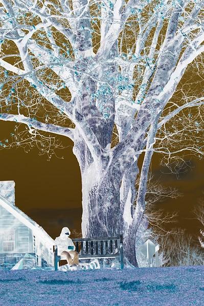 Class1D_HM_amy dixon_negative tree