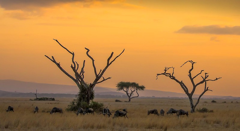 Class2D_1st_bill von holle_amboseli sunset