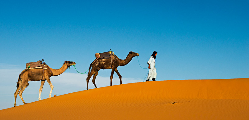 Class3C_1st_Bob Friedman_Ahmed and Two Camels