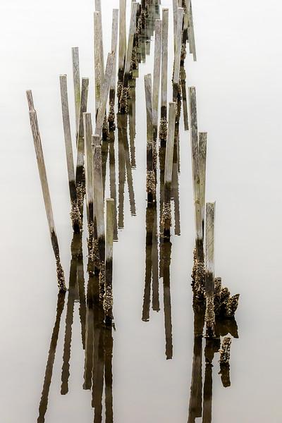 Class3C_1st_Tami Steiger_Water Sticks