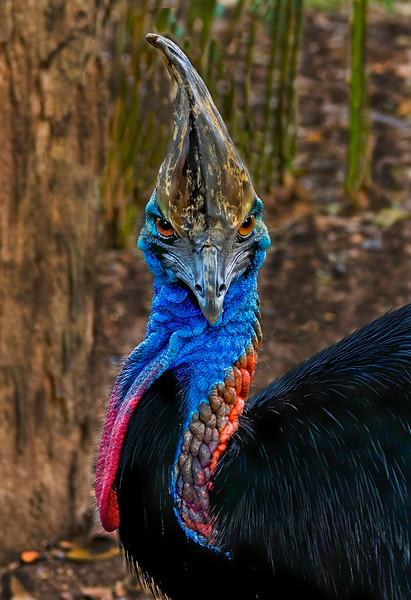 Class1C_2nd_Michael Mannix_Dino-Bird