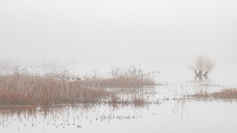 Class2C_2nd_Leslie Landerkin _Marsh Plants On A Foggy Morning