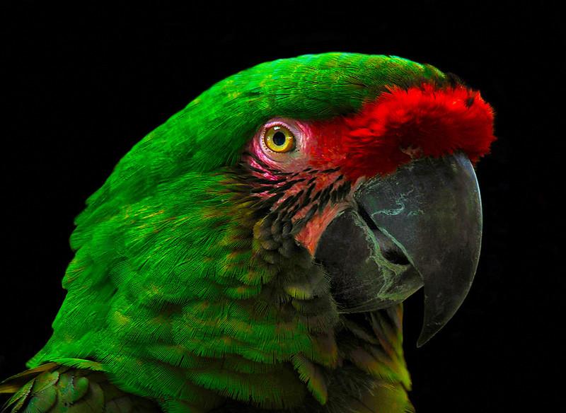 Class3D_HM_George Karamarkovich_Green parrot
