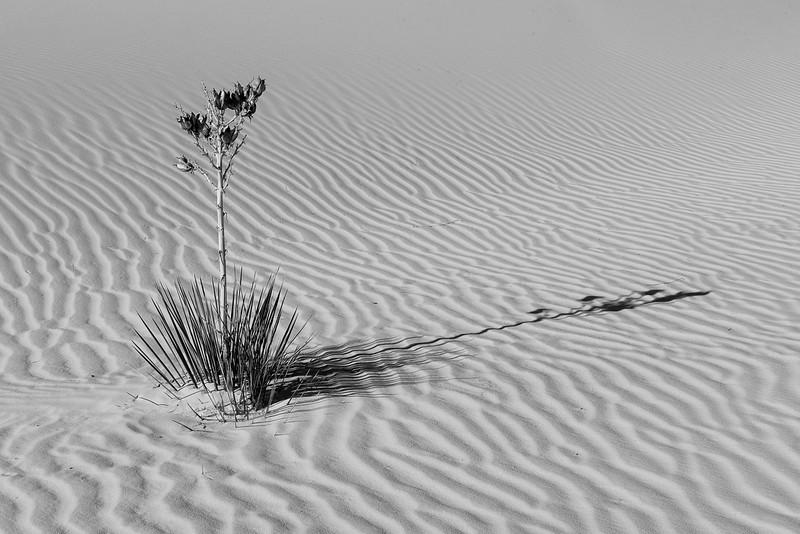 Class3M_2nd_Tom Brett_White Sands Yucca