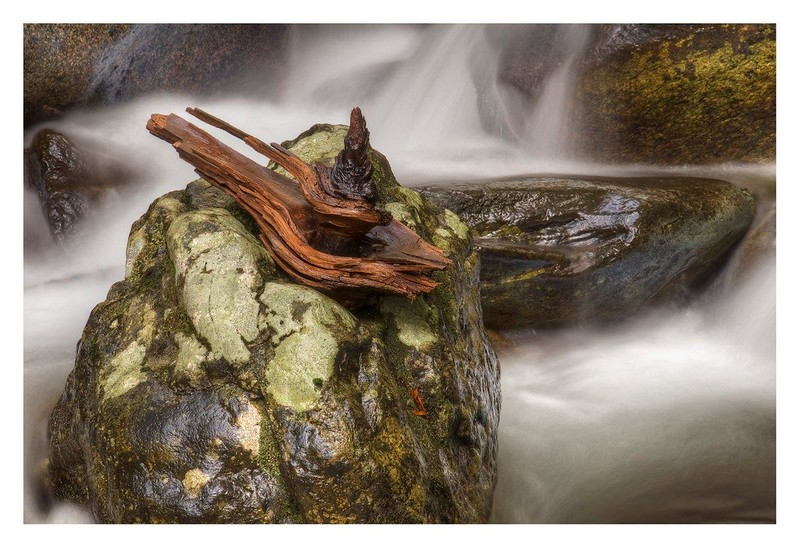 Wood Knot on a Rockin Shenandoah