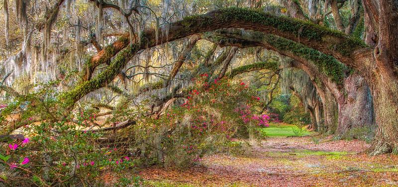 Magnolia Gardens, Charleston