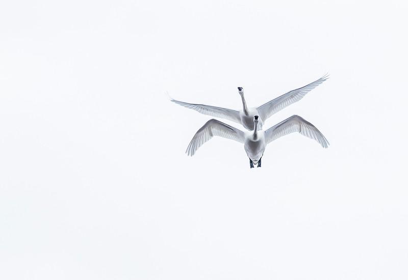 9th Duchess - Birds