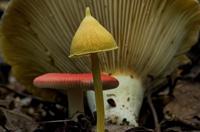 Ken Barnett - Mushrooms