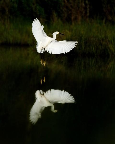 Bill Corbett - Birds