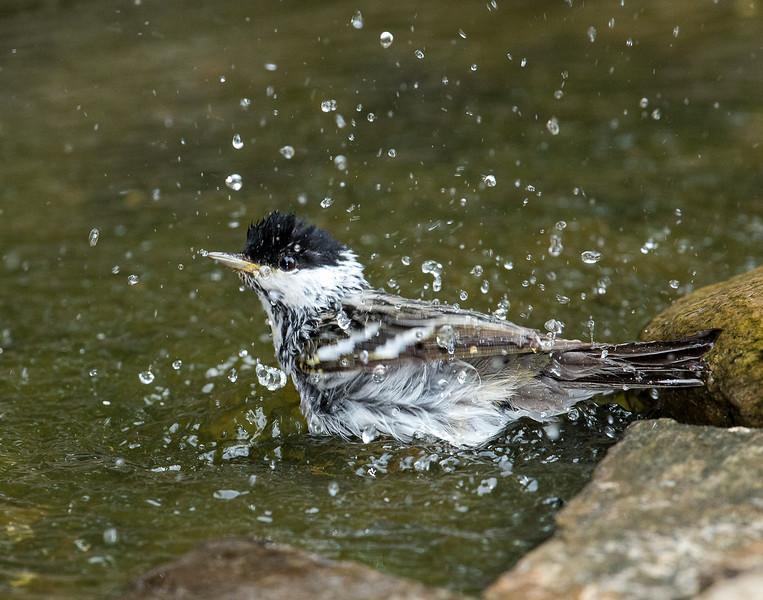 Caesar Sharper - Yard Birds