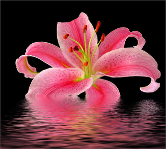 Kieu-Hanh Vu - Textured Flowers