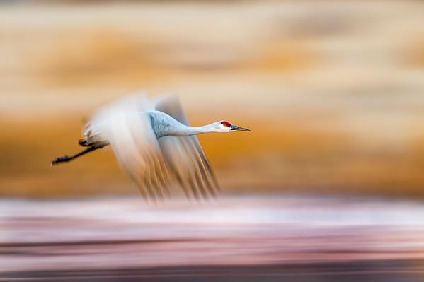 Stan Bysshe - Birds in Flight