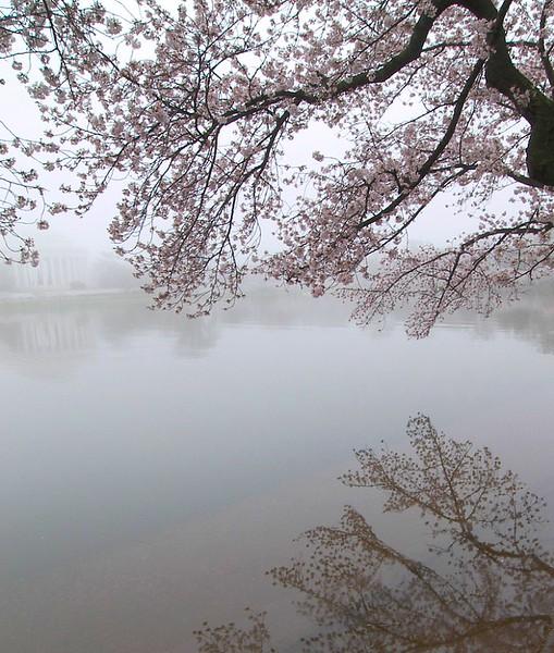 John Kozak - Liquid Blossoms
