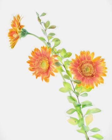 Keulan Nguyen - Flowers On Lightbox