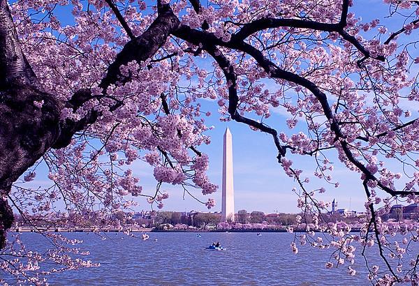 Kieu-Hanh Vu - Washington Monument