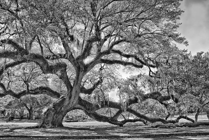 Patricia  Deege - Trees