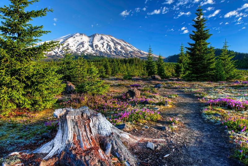 Pine Creek and Mt Saint Helens