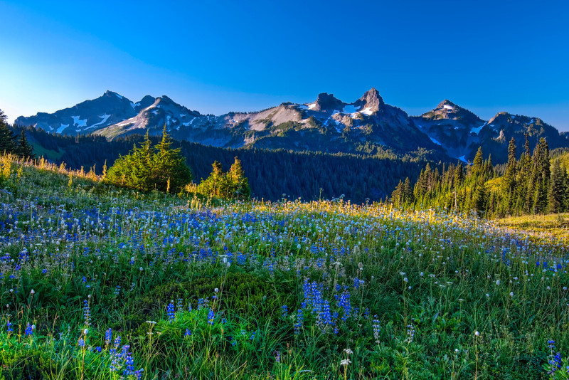 The Wildflowers, The Sunrise and the Tatoosh