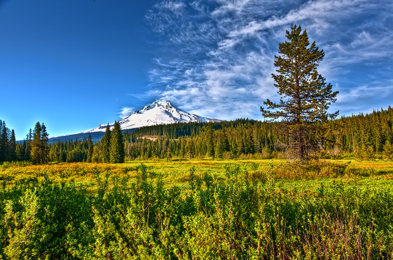 Pioneer Summit Meadows