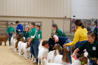 20190308_nw_goats013