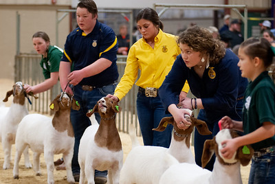 20190308_nw_goats014