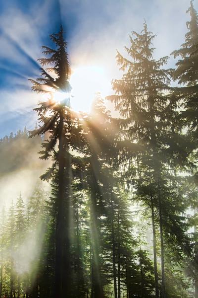 Got to Love Sunbeams..