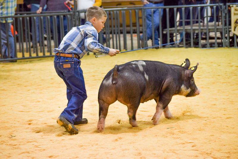 taloga_swine_20191228-14