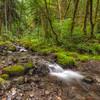 Gorton Creek in Early Spring..