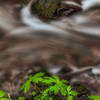 An Intimate Little Zig Zag Creek. Mt Hood National Forest Oregon