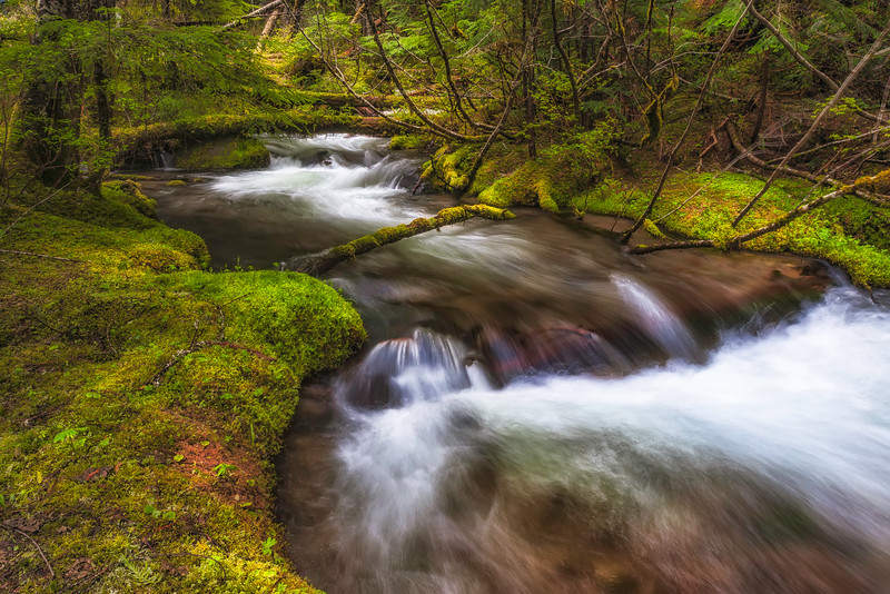 Lush Little Zig Zag Creek in the Mt Hood National Forest.
