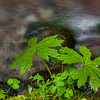 Flora...   Little Zig Zag Creek