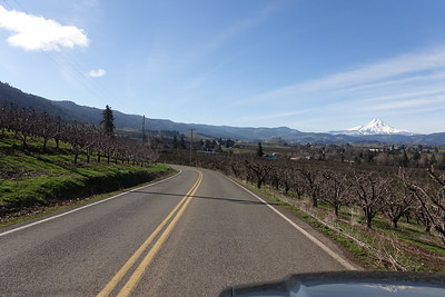 #6 Mt Hood Views