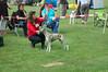 Keuring Beste Whippet pup