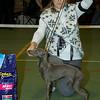 PLI - Beste Jonge Hond Teef: Fiefoerniek's Force Majeure (S. v.d. Graaf & L. Sahuleka)