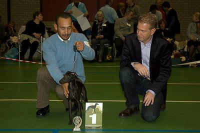 Beste Italiaanse Windhond - Jonge Honden - Reuen Fiefoerniek's Franki Feels Groovy - S. v.d. Graaf & L. Sahuleka