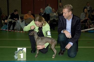 Beste Italiaanse Windhond - Jonge Honden - Teven Fiefoerniek's Femme Formidable FCI WYW'09 - S. v.d. Graaf & L. Sahuleka