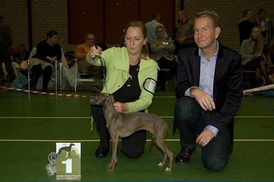 Beste Italiaanse Windhond - Jonge Honden  1 Fiefoerniek's Femme Formidable FCI WYW'09 - S. v.d. Graaf & L. Sahuleka