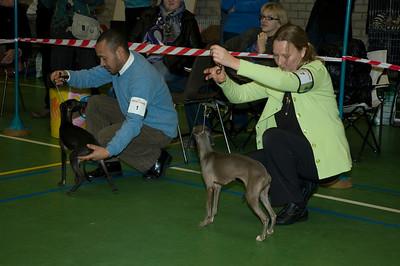 Beste Italiaanse Windhond - Jonge Honden  Fiefoerniek's Franki Feels Groovy - S. v.d. Graaf & L. Sahuleka Fiefoerniek's Femme Formidable FCI WYW'09 - S. v.d. Graaf & L. Sahuleka