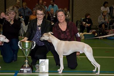 Beste Whippet - Jonge Honden 1 Salty Sand's Anthem of Atlantis - E. de Visser-van Peursem