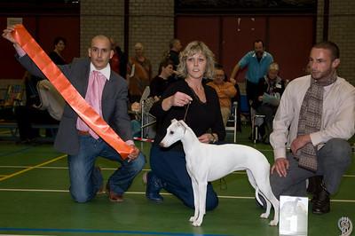 Beste Whippet Teven - Jonge Hond SDW Annadar Look Out Here I Come - M. Merlijn