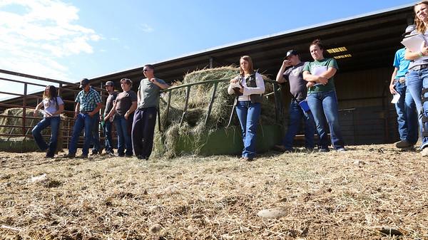 Livestock Judging Team