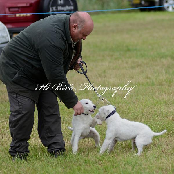 terrier pairs 2391.jpg