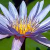 NY Botanical Gardens - Aquatic Gardens
