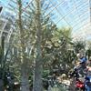 NY Botanical Gardens - 2007 At the Gardens