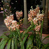 NYBG Evening Orchid Show
