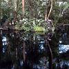 NY Botanical Gardens - May/Jun 2005