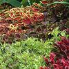 NY Botanical Gardens - Summer 2005