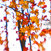 Fall  New York