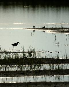 Montezuma Nat'l Wildlife Reserve 1